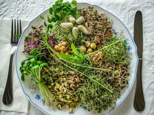 Alimentos prohibidos en el embarazo y el por qué - Brotes y germinados crudos
