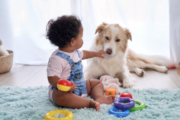 ¿Un bebé recién nacido puede estar cerca de un perro? - Perros y bebés: medidas de higiene