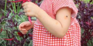 Cómo desinflamar picaduras de mosquitos en bebés