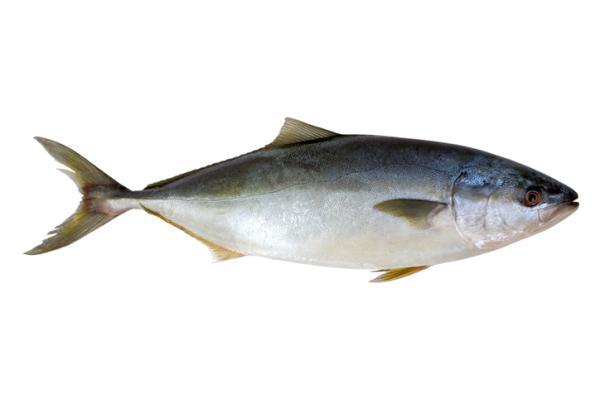 Alimentos prohibidos en la lactancia y el por qué - Pescados con alto contenido en mercurio