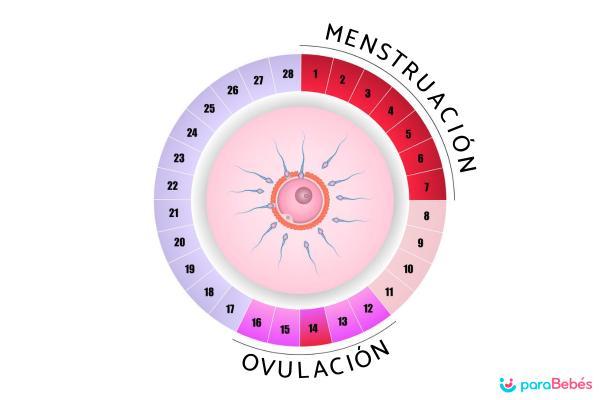 Cuáles son los días fértiles de una mujer