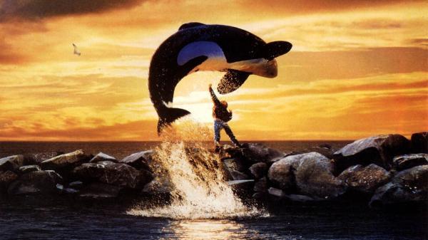 Películas educativas para niños y niñas - Liberad a Willy