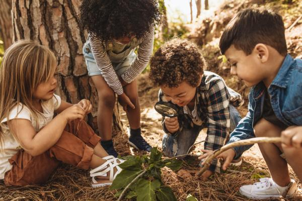 Juegos en la naturaleza para niños - ¿Qué hacen los insectos?