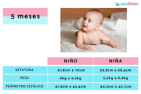 Cuánto pesa un bebe de 5 meses