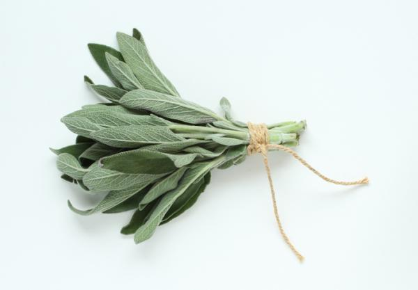 Las 16 especias prohibidas en el embarazo - Salvia
